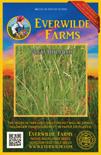 1000 Great Bulrush Native Grass Seeds - Everwilde Farms Mylar Seed Packet