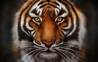 Home Living Room Art Wall Decoration Tiger Oil Painting HD Printed On Canvas