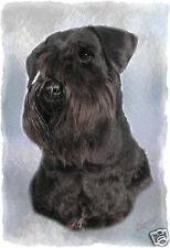 Miniature Schnauzer (Black) A6 Blank Card By Starprint