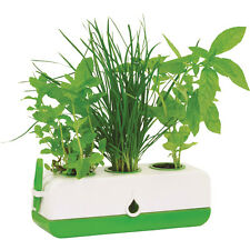 GP0320 - Green Kitchen Herb Grower (Moss Products)