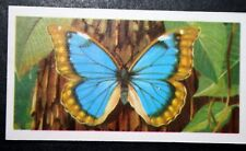 Tropical Butterfly   Blue Morpho   Morphidae   Illustrated Colour Card # VGC
