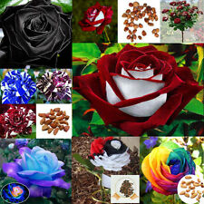 Rare Multi Colors Black Red White Rainbow Rose Flower Seeds Yard Garden Plants