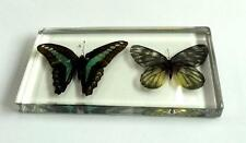 handmade specimen VINTAGE ACRYLIC TERRARIUM Floral Butterfly Paperweight