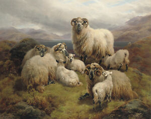 William Watson Sheep Grazing By A Loch Canvas Print 16 x 20   #3589