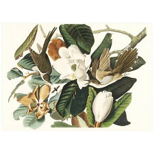 John J Audubon Black-Billed Cuckoo Deco Magnet, Birds of America Mini Gift