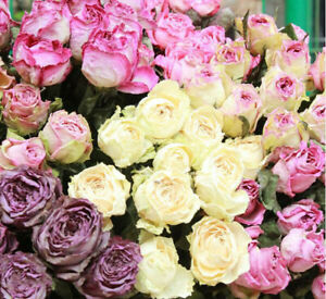 Natural Rose Dried Flowers Bouquet Flores for DIY Home Garden Wedding Decoration