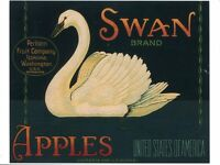 POST CARD OF VINTAGE ADVERTISING LABEL FROM FRUIT CRATES FOR SWAN APPLES