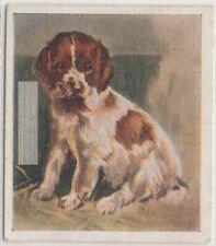 Welsh Springer Spaniel Puppy Dog Pet Animal Canine 80+ Y/O Trade Ad Card