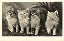 4 kittens cats on a row cute old photo postcard 1930's