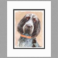 Spinone Italiano Dog Original Art Print 8x10 Matted to 11x14