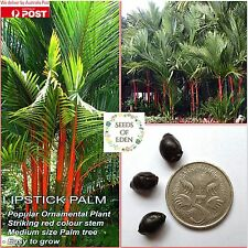 5 LIPSTICK PALM SEEDS (Cyrtostachys renda); Red stem rare tropical plant