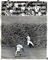 1965 Baseball  Wire Photo,Chicago Cubs, Billy Williams, Don Landrum, Pete Rose 2