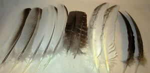 11~ TURKEY FEATHER ASSORTMENT OF PAIRS & COLORS ~ BROWN ~ GREY ~ CINNAMON ~WHITE