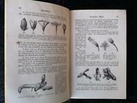 Wilhelm Julius Behrens : Lehrbuch der Allgemeinen Botanik - Braunschweig 1889