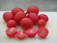 Sweet Cranberry Tomato Seeds- Organic Cherry- 40+ 2019 Seeds  $1.69 combined S/H