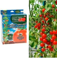 As Seen On Tv Gardeners Choice Giant Tomato Tree Growing Kit Easy to Plant - New