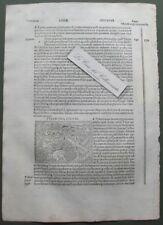 """TIVOLI. Xilografia da """"Filippo Foresti"""", anno 1503"""