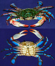 "Blue Crab  Replica Trop[cal Fish Wall Mount Plaque ~ 10"" X 6"" ~ Nautical Decor"