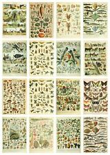 More details for vintage wildlife identification posters birds animals nature wild flowers trees
