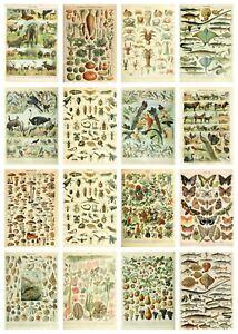 Vintage Wildlife Identification Posters Birds Animals Nature Wild Flowers Trees