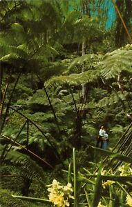 Tree Fern Forest around Kilauea Crater in Volcanic Hawaii National Park Vintage