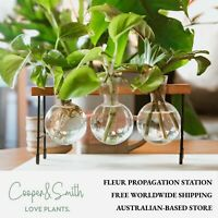 Fleur Propagation Station by Cooper&Smith | New Glass Vase, Australian Store