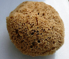 Sea Sponge xLarge 6.5'' = 16,5cm brown = Unbleached honeycomb GREEK KALYMNOS