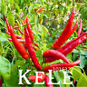100 PCS Seeds Red Pepper Potted Garden Plants Organic Vegetables Bonsai 2019 New