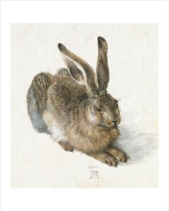 Durer - The Hare - fine art giclee print poster wall art - various sizes