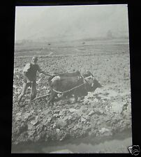 Glass Magic lantern slide  PLOUGHING RICE FIELD C1920 PROBABLY INDIA