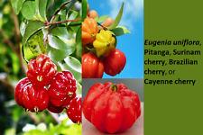 Pitanga tree, Surinam cherry, Brazilian Cherry, Cayenne Cherry tree