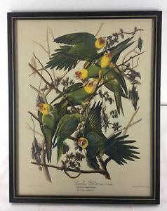 Vintage 11x14 Audubon CAROLINA PARROT Art Print in Black and Gold Wood Frame