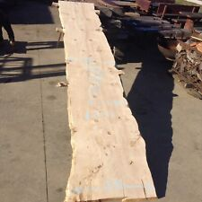 Bunya Pine Slab No.3 Dressed Dried 4m Long. Freight Available