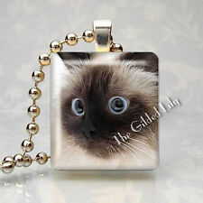 Himalayan Kitten Face Cat Pet Scrabble Tile Art Pendant Altered Charm