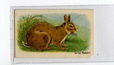(Jb1889-100)  HUSTLER,ANIMALS 3RD SERIES,WILD RABBIT,1925#18
