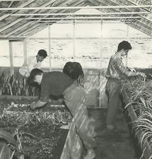 Serres horticoles Vintage silver print Tirage argentique  18x18  Circa 196