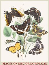 Make/Sell ANTIQUE INSECT PRINTS - Premium Hi-Res Restored Image Collection