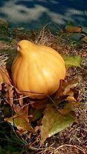 Seminole Pumpkin- 5 Usa Seeds. Heirloom Florida squash. Easy to grow, delicious!