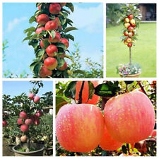 Hot Bonsai Apple Tree Seeds Garden Yard Outdoor Living Fruit Plant Fascinating H