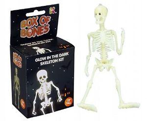Glow in the dark Skeleton Model Kit Educational Toy 30cm tall Full Skeleton K8