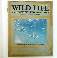 Wild Life old illustrated magazine Douglas English Sept 1914 kingfisher photos