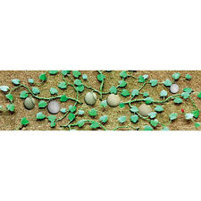 "Cantaloupe Patch 2-3/4"" 6 Pack Flowering Plants O Scale JTT Scenery Products"