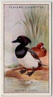 Tufted Duck Bird c90  Y/O Ad Trade Card