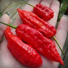 20++ Red Ghost Pepper Seeds Bhut Jolokia Super Hot Pepper