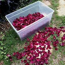 Sun Dried Rose Petals 100% Natural Dry Rose Confetti 5 cups.