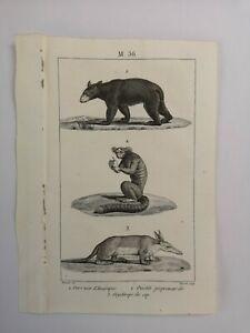 PLANCHE / GRAVURE de 1816 - MAMMIFERES / OURS NOIR / OUISTITI (M36)