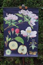 Rollkarte Schulwandkarte Wandkarte Apfelbaum Schulkarte Karte Wand Lehrtafel
