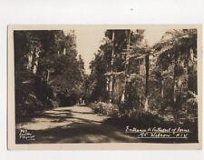 Cathedral Of Ferns Mt Wilson NSW Australia [Carlton 743] RP Postcard 143b