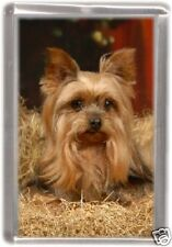 Yorkshire Terrier Fridge Magnet Design No8 by Starprint
