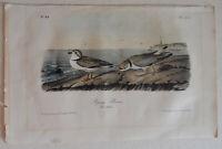 JOHN JAMES AUDUBON HAND COLORED LITHOGRAPH, 1856